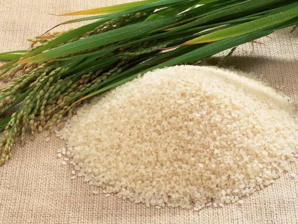 Рис и трава