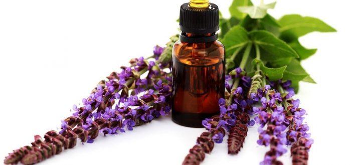 Цветки и масло шалфея